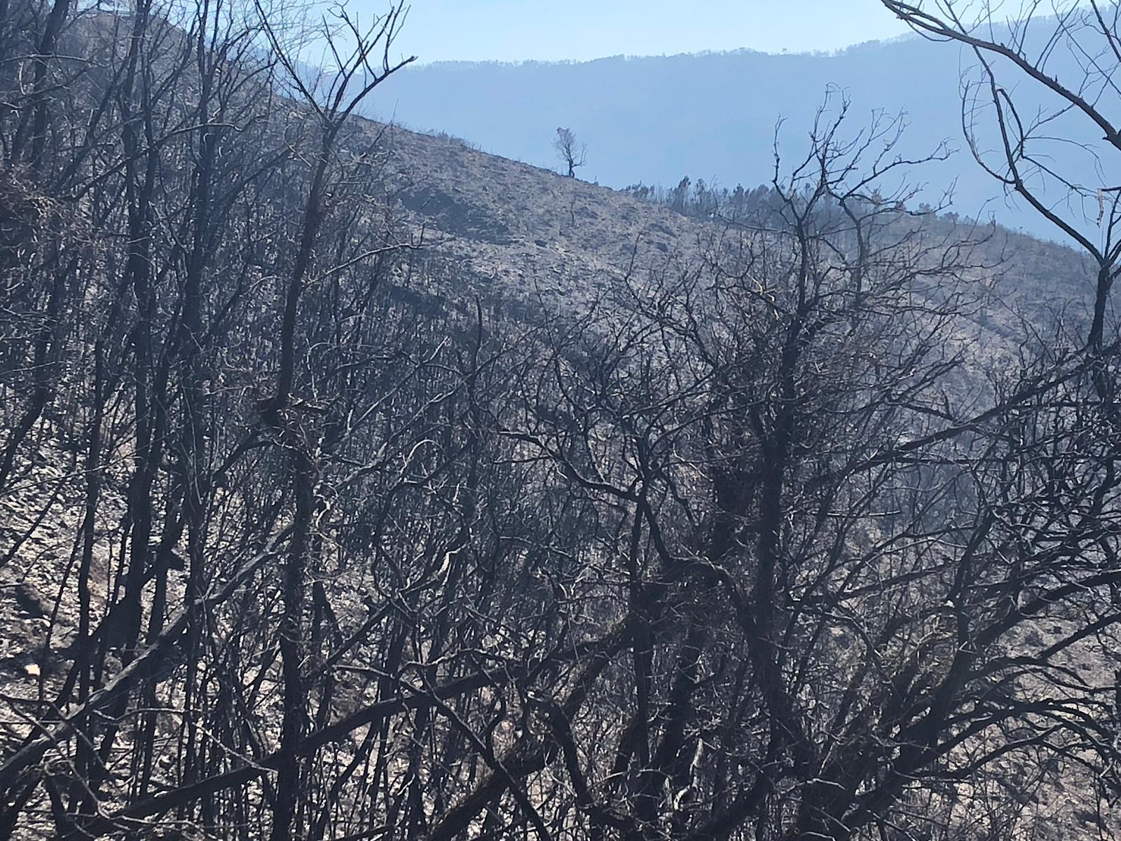 Bosco Distrutto dal Fuoco, Monte Serra 2018 - Foto di Cascina Notizie