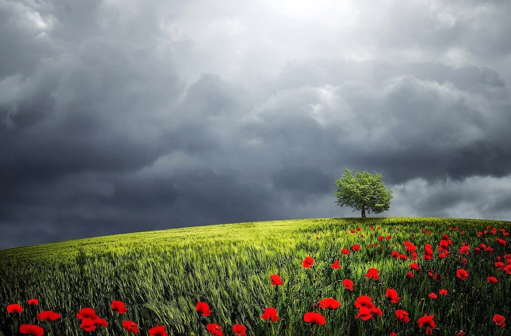tree, poppy field, clouds